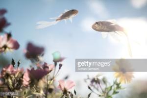 Gardenfish / Fotografía de Adrian Samson.
