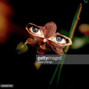 Orchid with eyes / Fotografía de Annie Collinge.